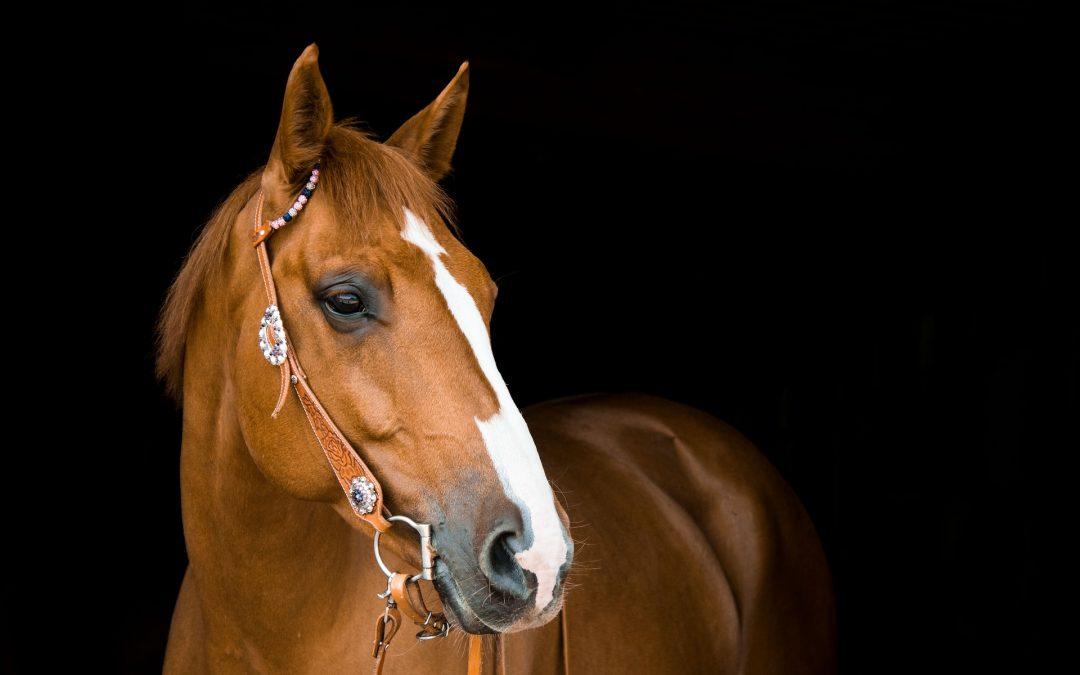 Voici quelques conseils sur la façon dont vous pouvez démarrer une entreprise de pension pour chevaux